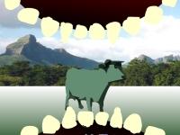 Флеш игра Симулятор волка 3D