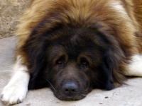 Флеш игра Скучающий пес: Пазл