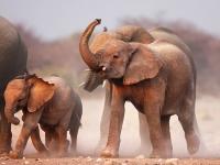 Флеш игра Слоны: Пазл