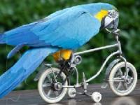 Флеш игра Смешной попугай: Пазл