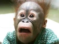 Флеш игра Смешные обезьянки: Пазл
