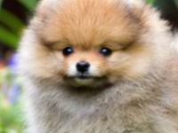 Флеш игра Собаки: Поиск отличий