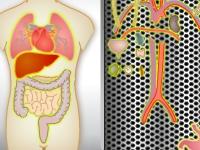 Флеш игра Трансплантация органов