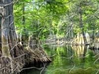 Флеш игра Тропический лес: Пазл