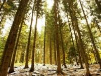 Флеш игра Вечнозеленые леса: Пазл