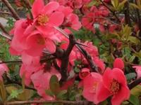 Флеш игра Весенние цветы: Поиск предметов