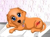 Флеш игра Вылечите собачку