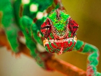 Флеш игра Зеленая ящерица в джунглях