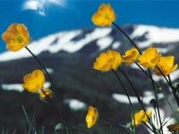 Флеш игра Желтые цветы: Пазл