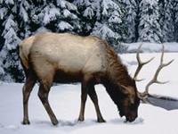 Флеш игра Зимний олень: Пазл