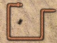 Флеш игра Змейка: Охота на жуков